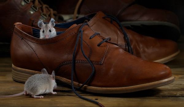 They may be cute, but mice can be a health risk. Prevent a rodent infestation with the right type of insulation.  How to Deter Pests with the Right Insulation | Okanagan Insulation Services