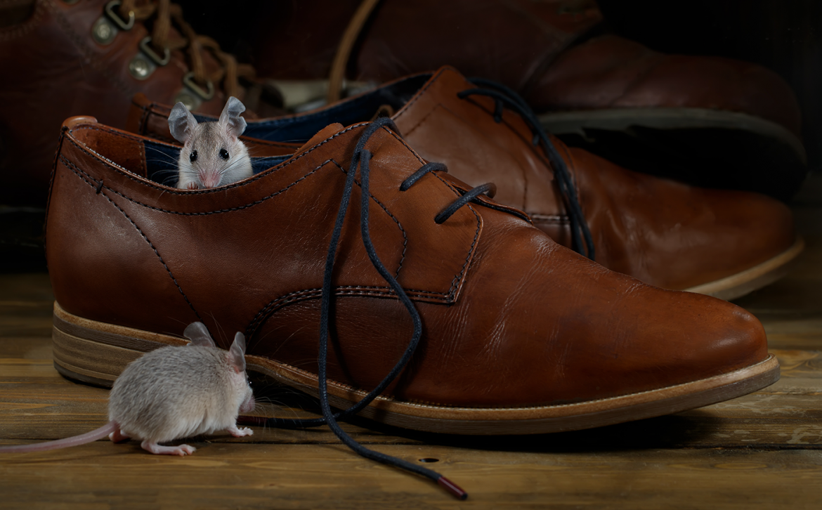 They may be cute, but mice can be a health risk. Prevent a rodent infestation with the right type of insulation.